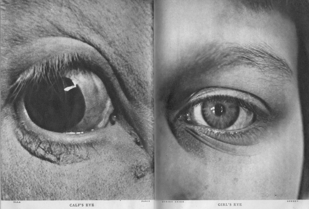 123935235721 - adelphe calfs eye and girls eye lilliput